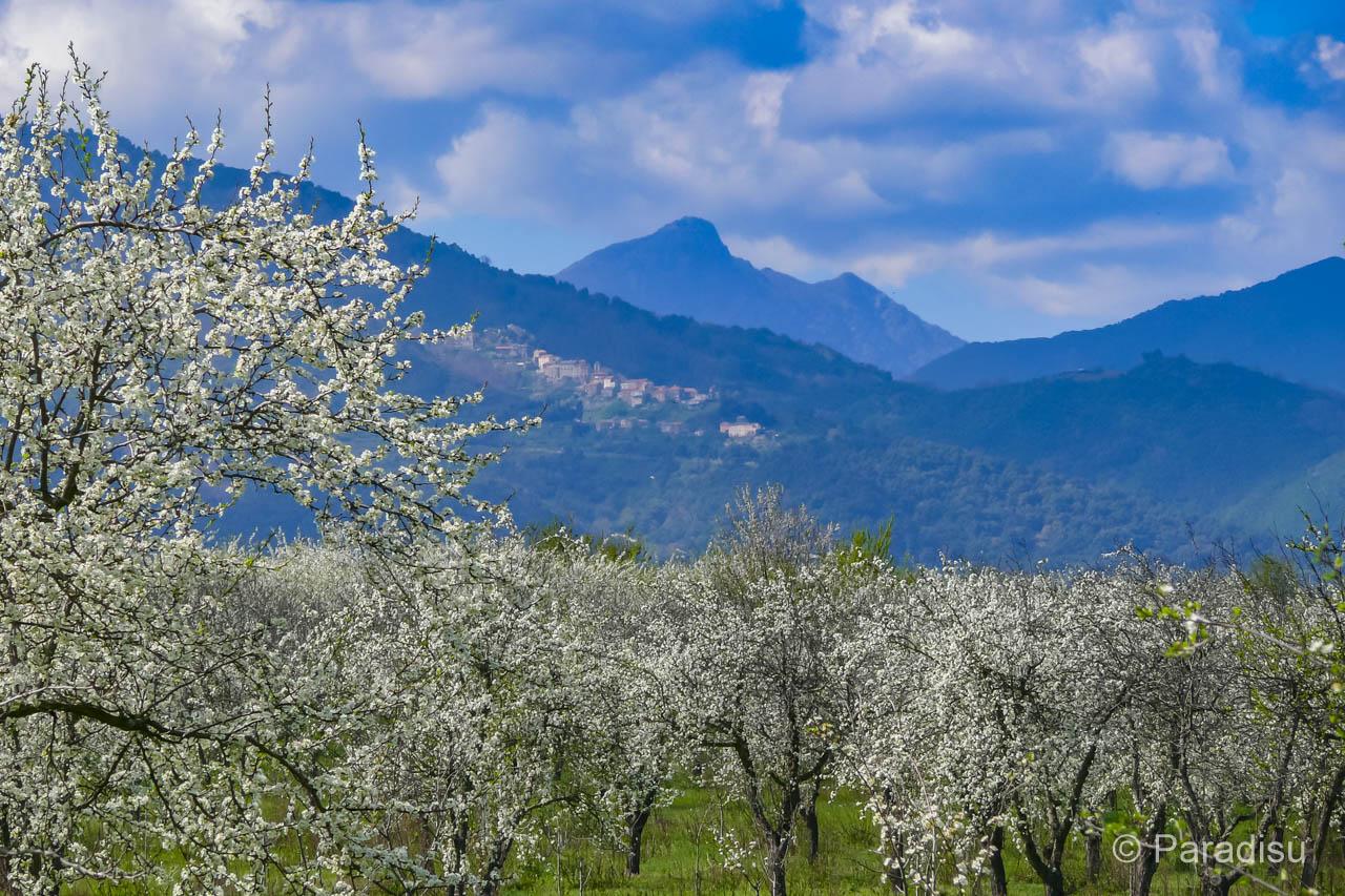 Korsika Reisezeit Frühling