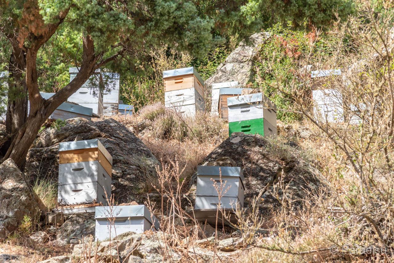 Bienen Im Ascotal